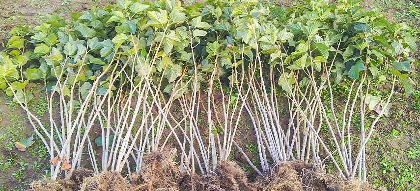 Плодові дерева та кущі: що саджати восени і як це робиться №2