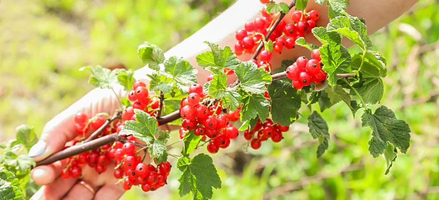 Плодові дерева та кущі: що саджати восени і як це робиться №3