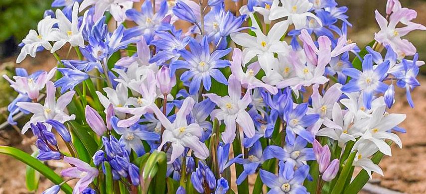 Гарний сад без турбот: обираємо найбільш невибагливі квіти №5