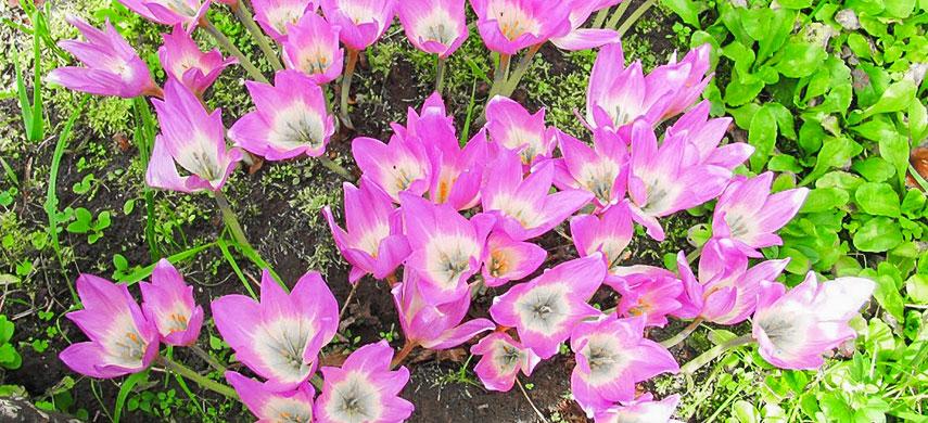 Гарний сад без турбот: обираємо найбільш невибагливі квіти №6