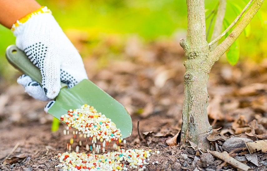 Весняна підгодівля плодових дерев і чагарників 2