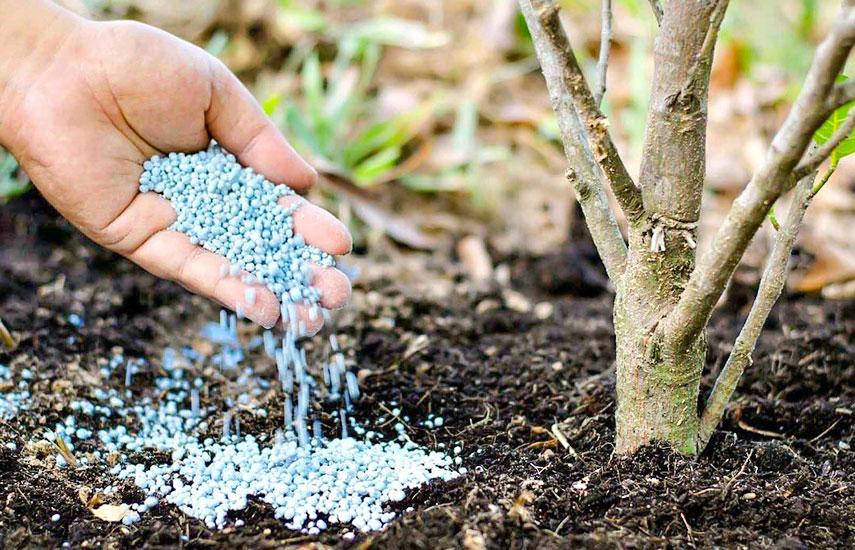 Весняна підгодівля плодових дерев і чагарників 1