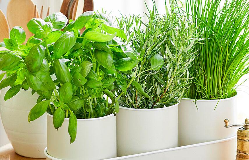 вирощування розсади що треба знати