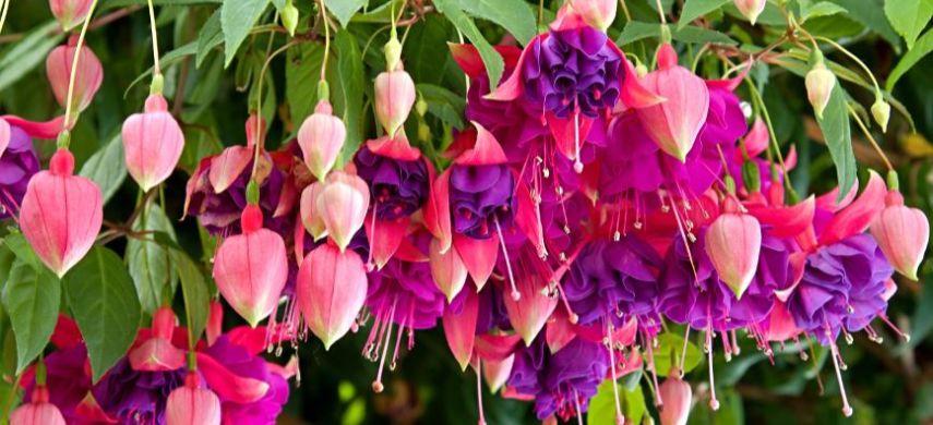 квіти, які квітнуть влітку