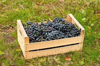 зберігання винограду в ящиках