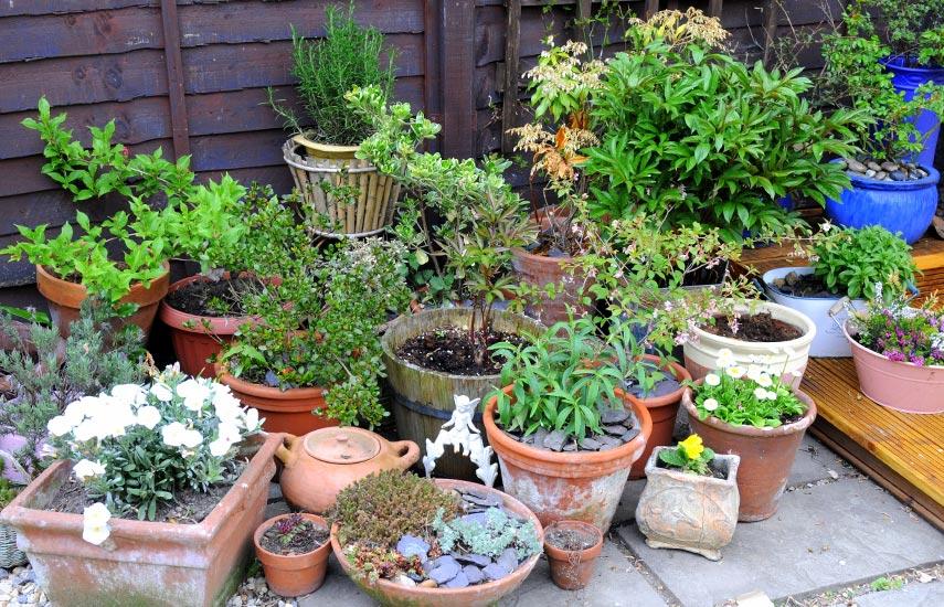 способы хранения контейнерных растений зимой