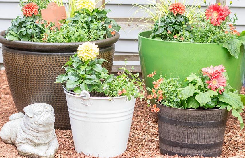 Хранение горшечных растений в холода