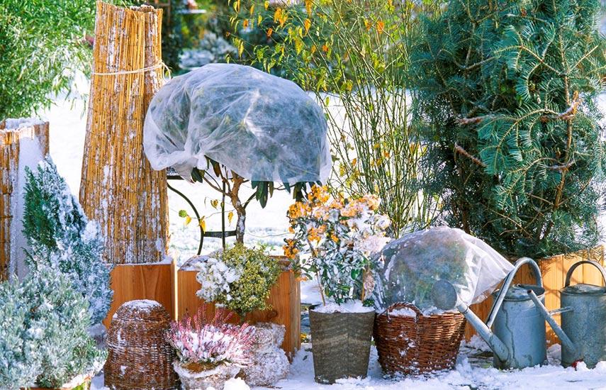 Горшечные растения зимой