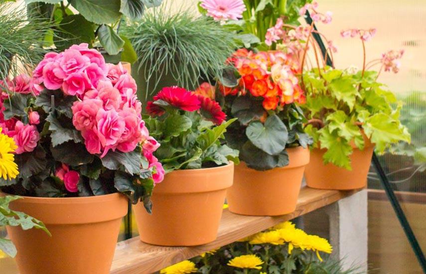 Хранение контейнерных растений