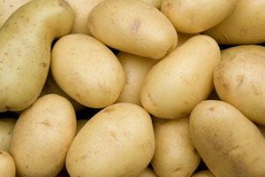 картопля стійка до колорадского жука