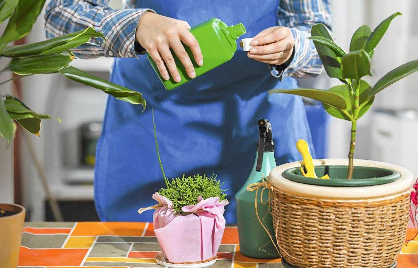 подкормки комнатных растений