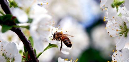 Отсутствие насекомых-опылителей