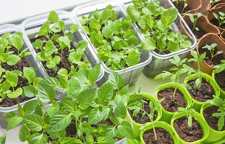 Посев семян в кипяток
