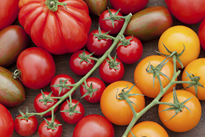 Кращі сори томатів
