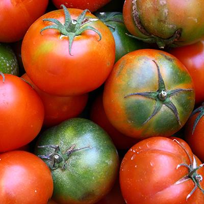 раньостиглі сорти томатів