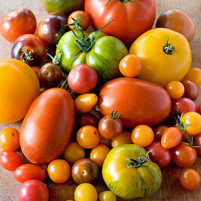 Крупноплідні сорти помідорів