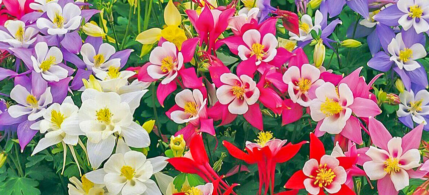 Гарний сад без турбот: обираємо найбільш невибагливі квіти