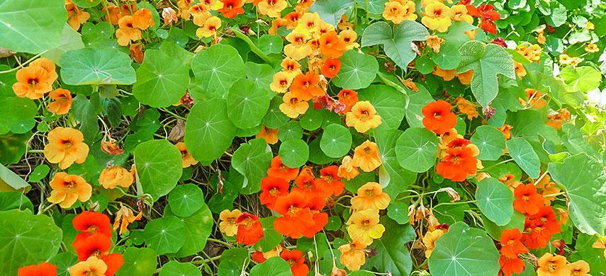 Гарний сад без турбот: обираємо найбільш невибагливі квіти №8