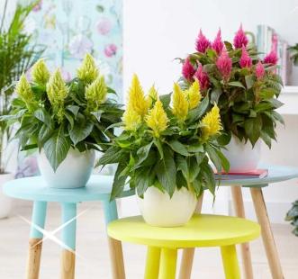 Добрива для квітучих рослин