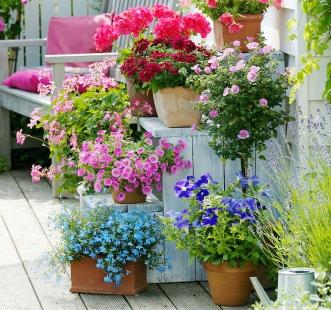 Насіння багаторічних квітів