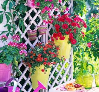 Насіння дворічних квітів