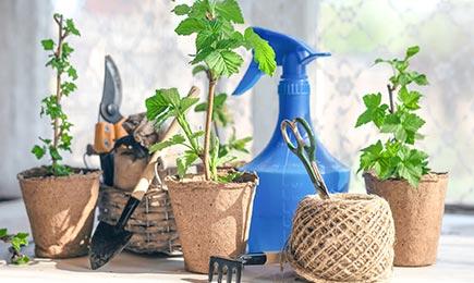 Удобрения для ягодных культур   Дом и Сад