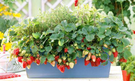 Добрива   Дім і Сад