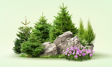Хвойний сад | Дім і Сад