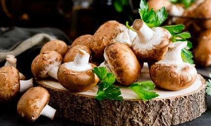 Міцелій грибів   Дім і Сад