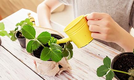 Стимулятори росту   Дім і Сад
