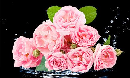 Карнавал роз | Дом и Сад