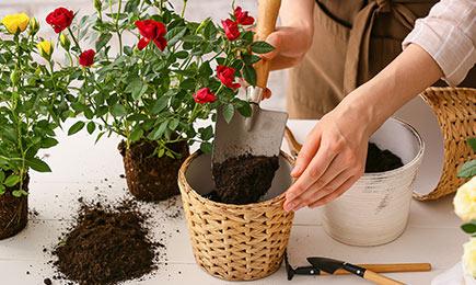 Засоби для захисту   Дім і Сад