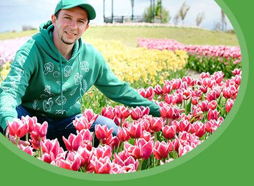 Каталог - -60% на прекрасні, ошатні тюльпани - Дім і Сад Україна
