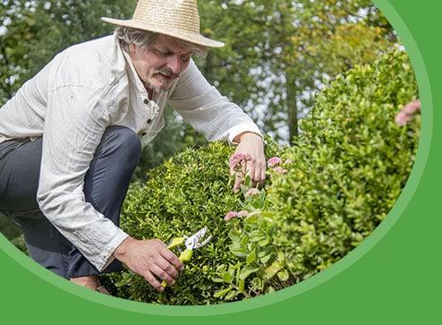Каталог - Декоративні рослини - Дім і Сад Україна