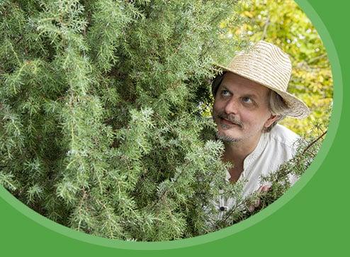 Каталог - -40% на хвойні рослини - Дім і Сад Україна