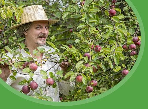 Каталог - -50% на плодові дерева - Дім і Сад Україна