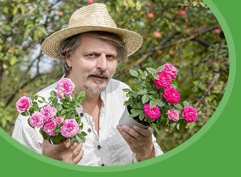 Каталог - -40% на саджанці троянд - Дім і Сад Україна
