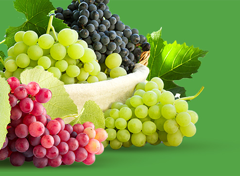 Каталог - -50% на саджанці винограду - Дім і Сад Україна